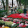 Beziers flower market