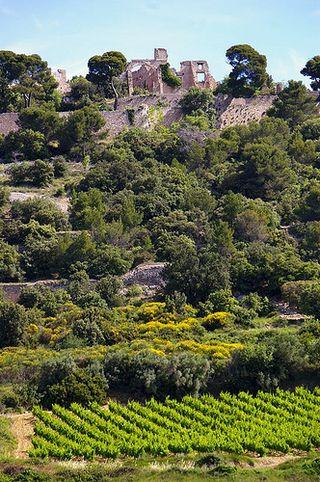 Castle plus vines