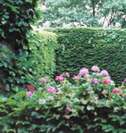 25 Walled garden in summer